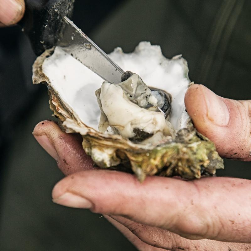 Oyster_Week_Oesterssafari_2249